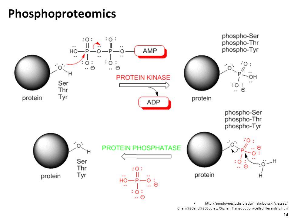 Phosphoproteomics http://employees.csbsju.edu/hjakubowski/classes/ Chem%20and%20Society/Signal_Transduction/cellsdifferentsig.htm.