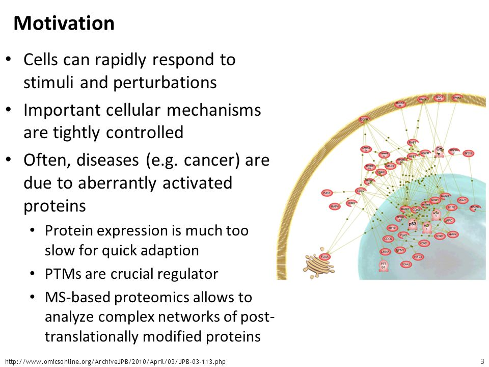 Motivation Cells can rapidly respond to stimuli and perturbations