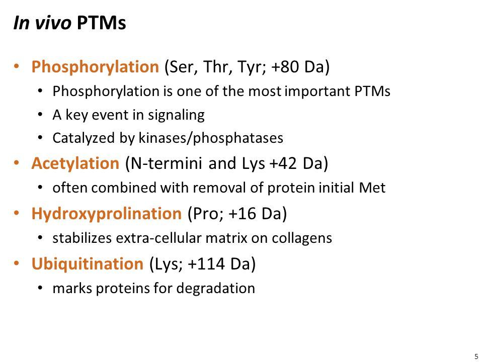In vivo PTMs Phosphorylation (Ser, Thr, Tyr; +80 Da)