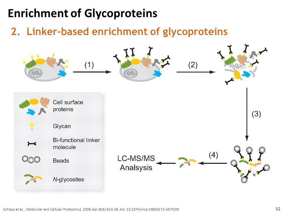 Enrichment of Glycoproteins