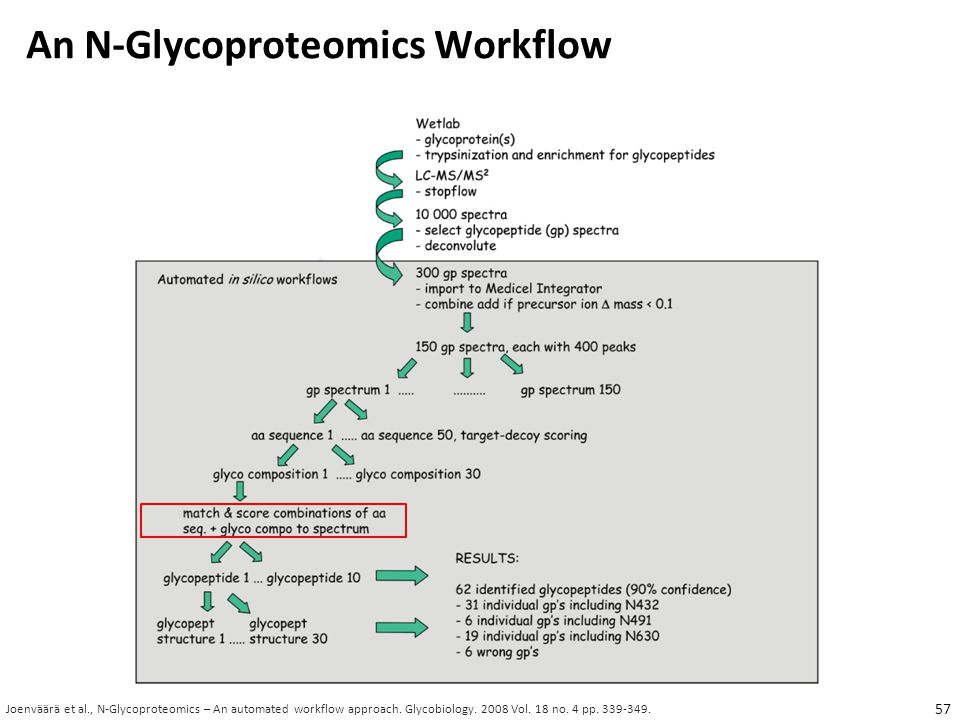 An N-Glycoproteomics Workflow