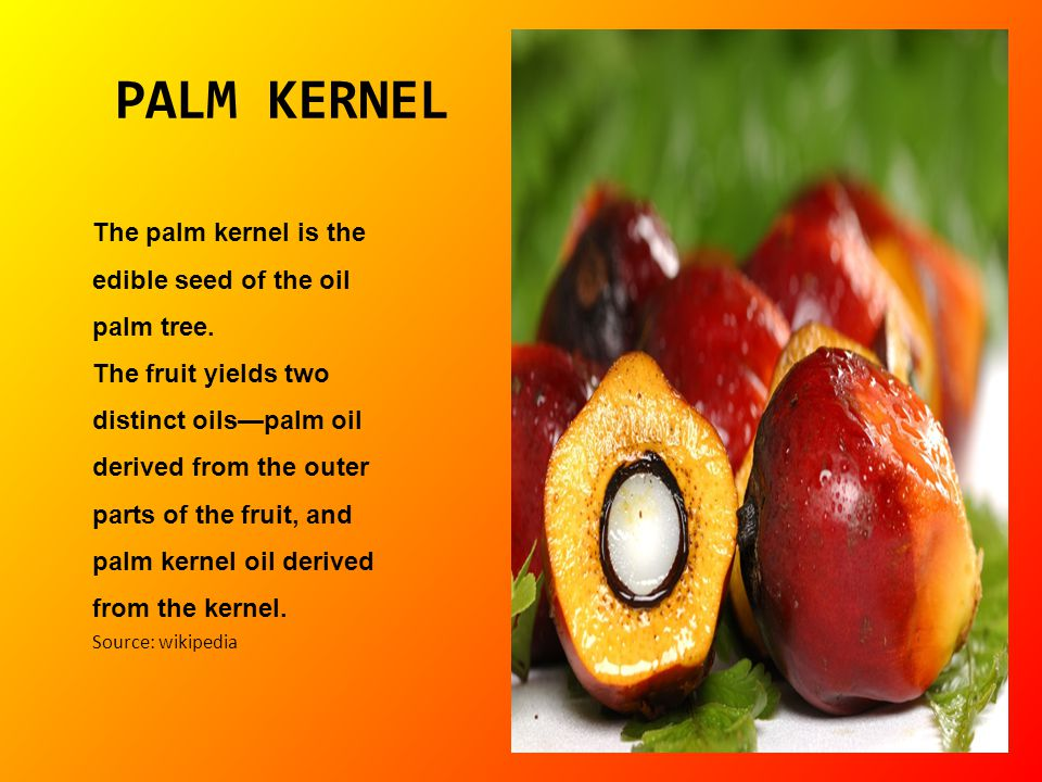 PALM KERNEL The palm kernel is the edible seed of the oil palm tree.