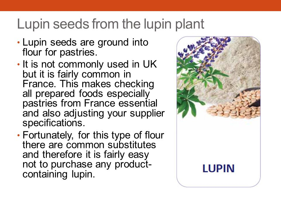 Lupin seeds from the lupin plant