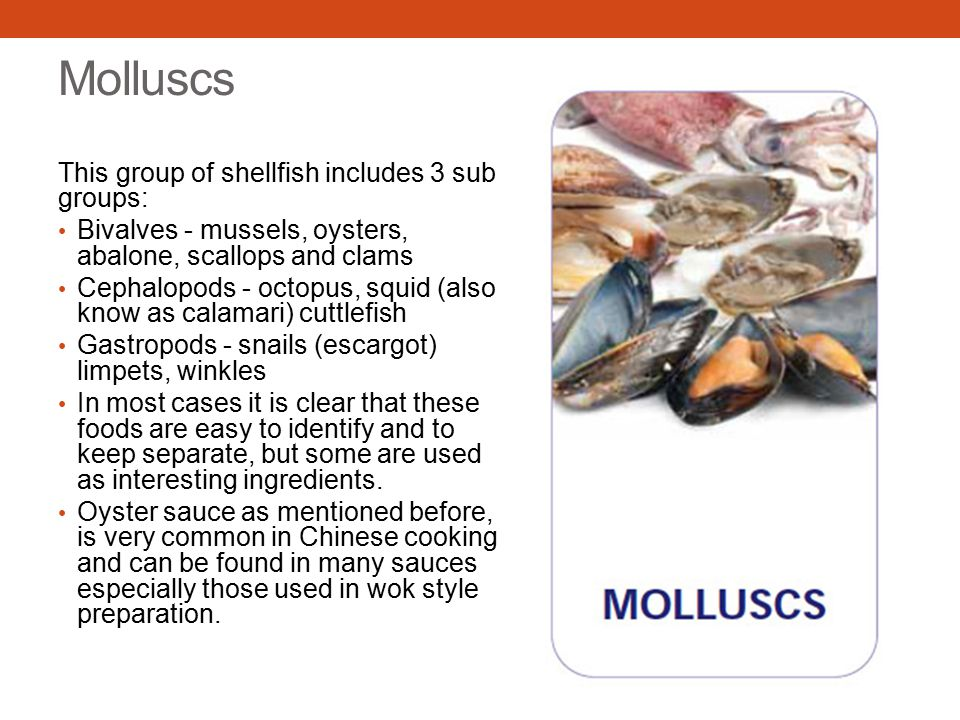 Molluscs This group of shellfish includes 3 sub groups: