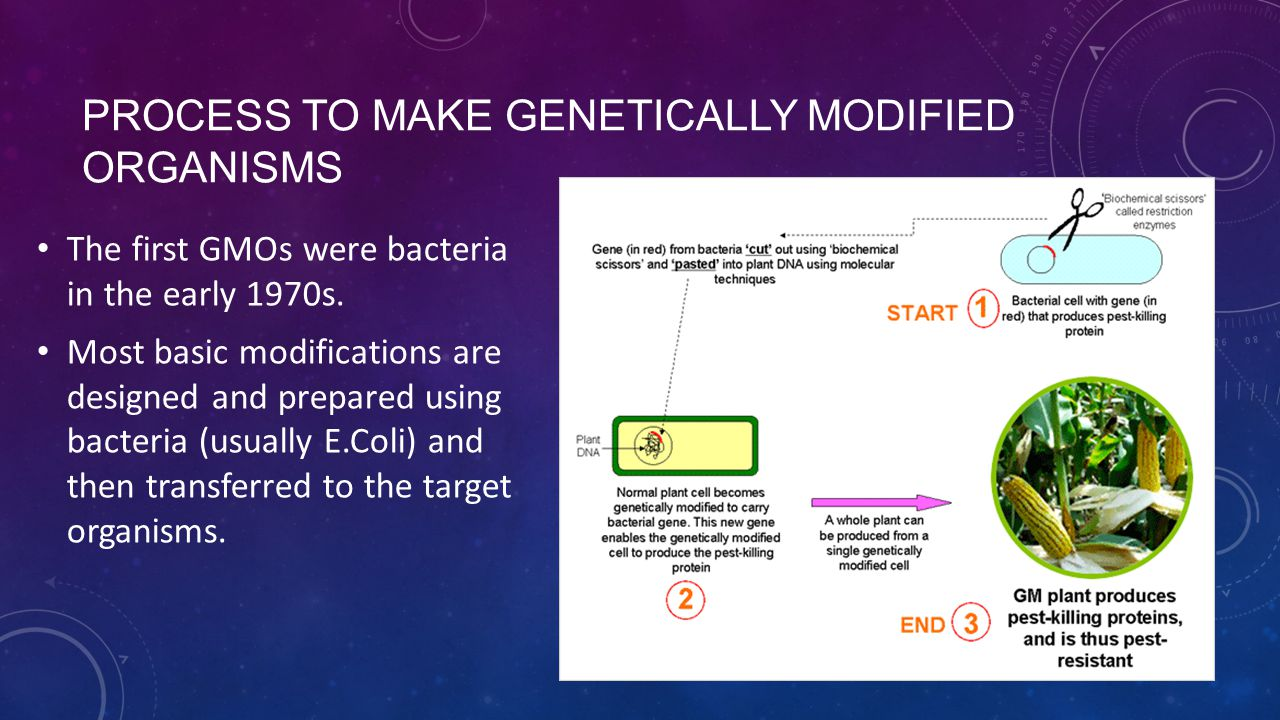 Process to make Genetically modified Organisms