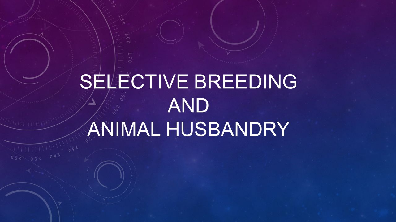 SELECTIVE BREEDING AND ANIMAL HUSBANDRY