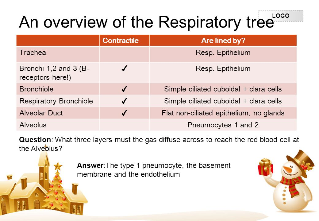 An overview of the Respiratory tree