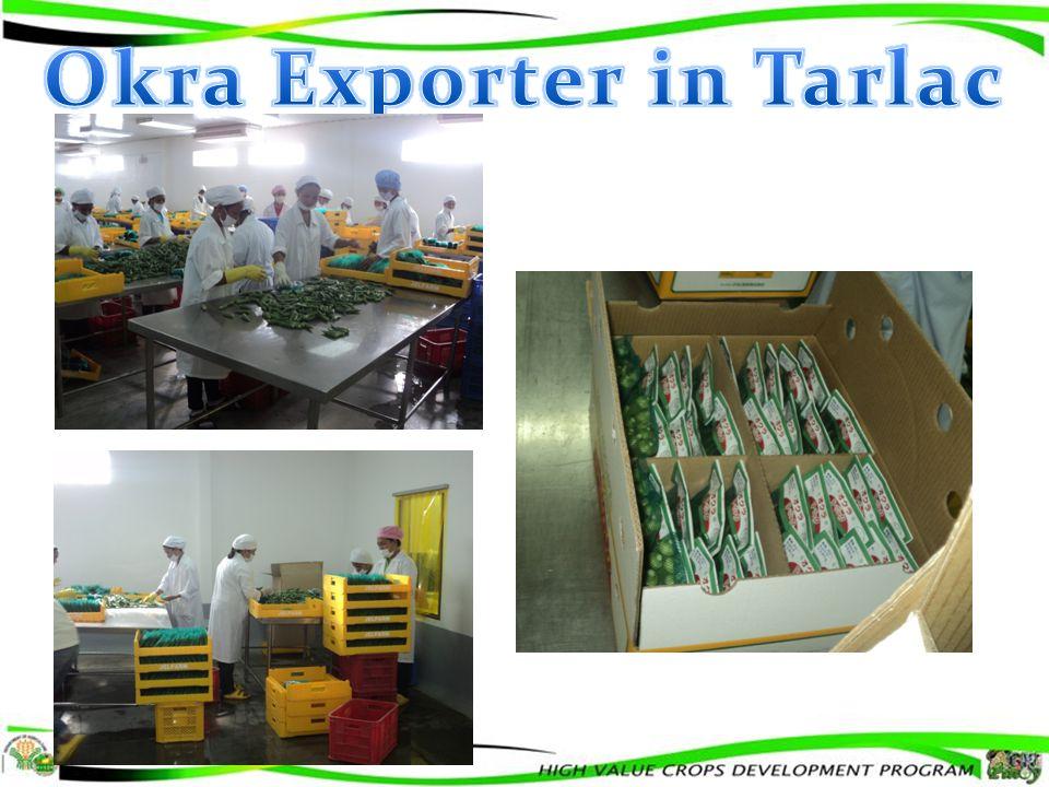 Okra Exporter in Tarlac