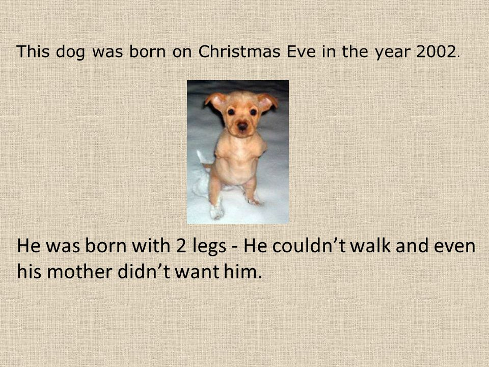 This dog was born on Christmas Eve in the year 2002.