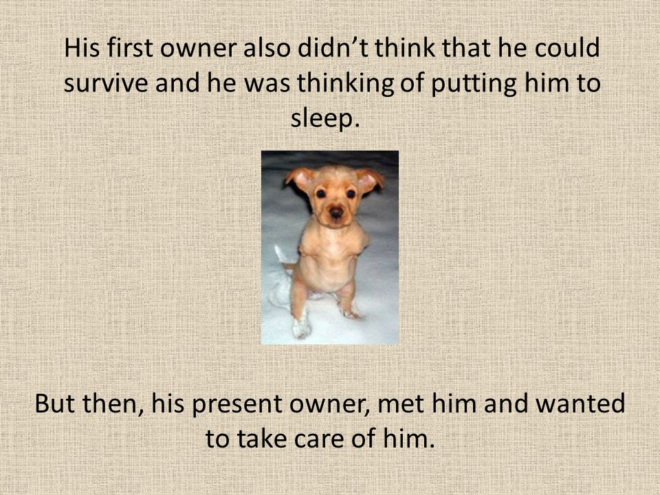 But then, his present owner, met him and wanted to take care of him.