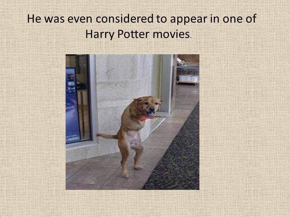 He was even considered to appear in one of Harry Potter movies.