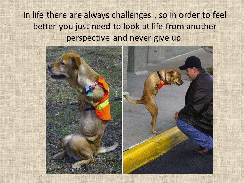 In life there are always challenges , so in order to feel better you just need to look at life from another perspective and never give up.