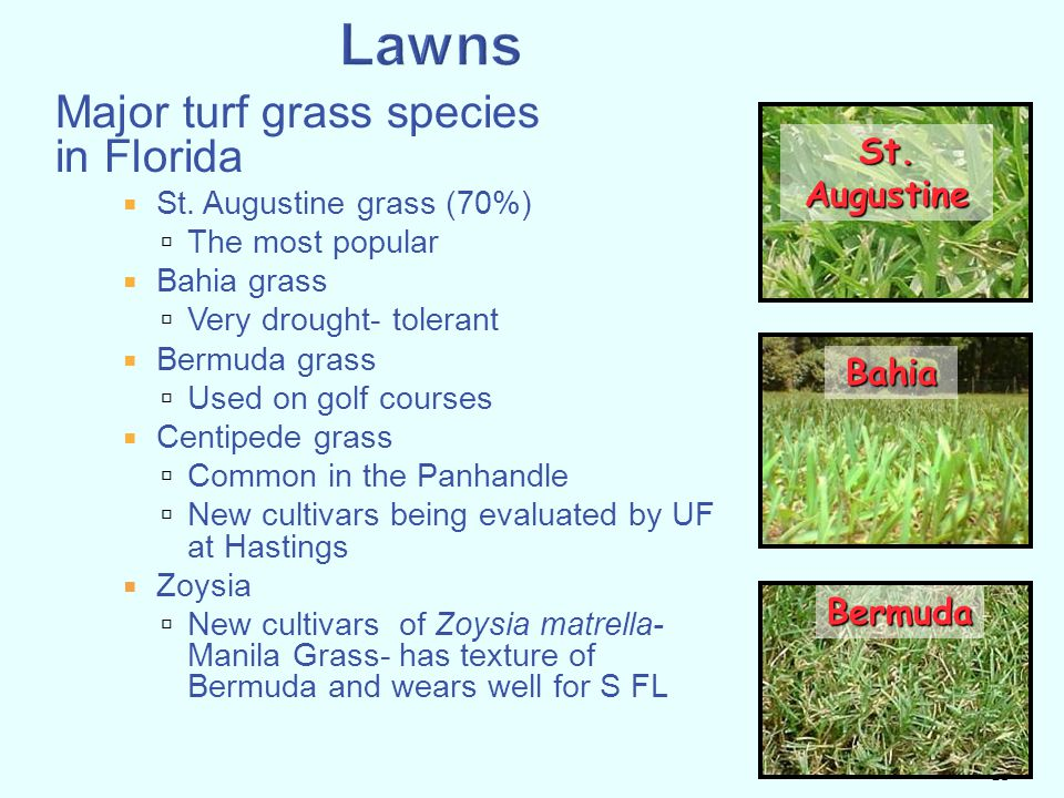 Lawns Major turf grass species in Florida St. Augustine Bahia Bermuda