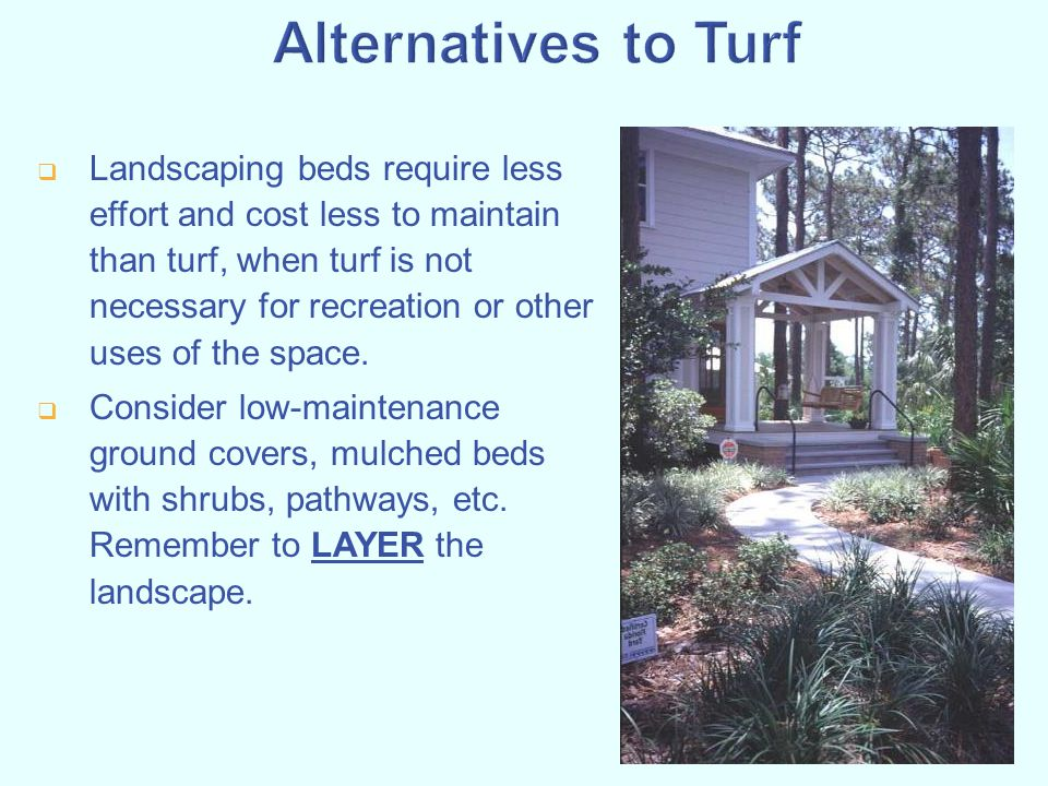 Alternatives to Turf