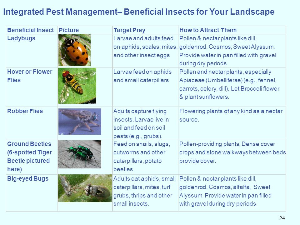 Integrated Pest Management– Beneficial Insects for Your Landscape