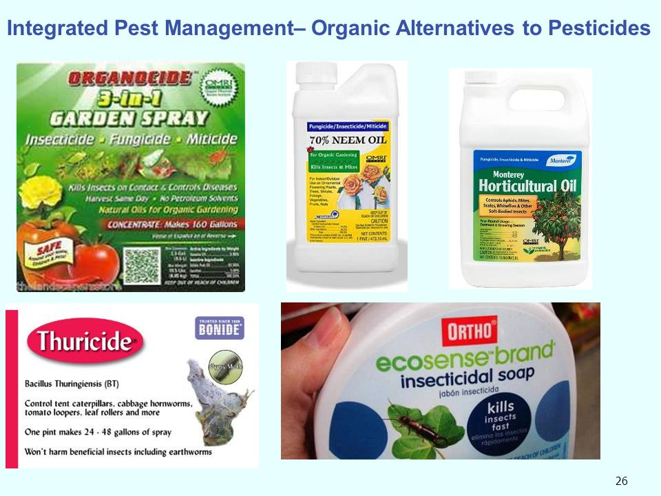 Integrated Pest Management– Organic Alternatives to Pesticides