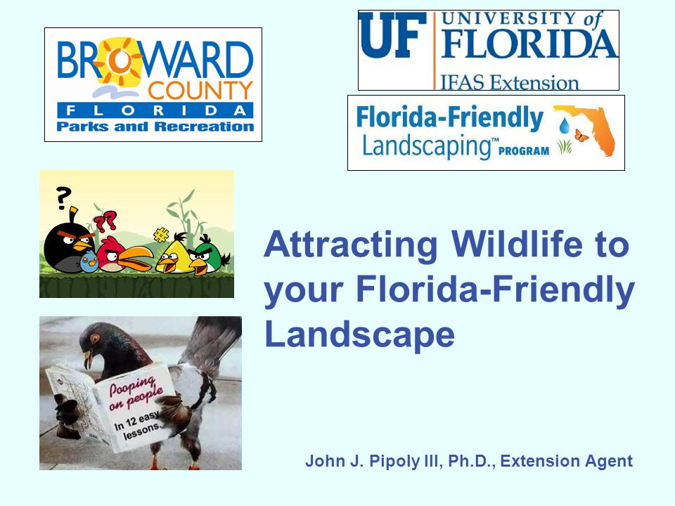 Attracting Wildlife to your Florida-Friendly Landscape