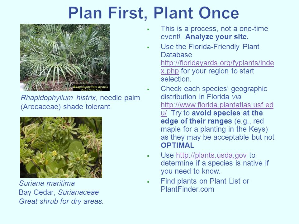 Plan First, Plant Once This is a process, not a one-time event! Analyze your site.