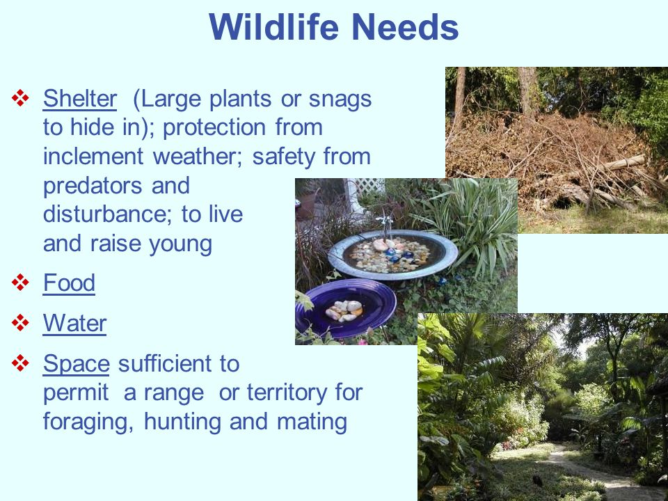 Wildlife Needs Shelter (Large plants or snags to hide in); protection from inclement weather; safety from predators and.