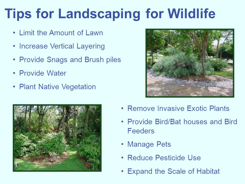 Tips for Landscaping for Wildlife