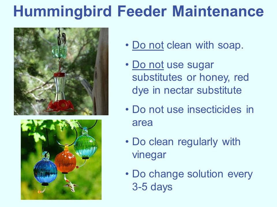 Hummingbird Feeder Maintenance