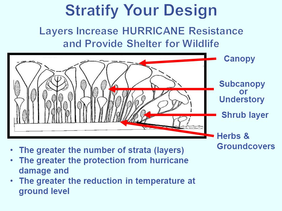 Stratify Your Design Layers Increase HURRICANE Resistance and Provide Shelter for Wildlife