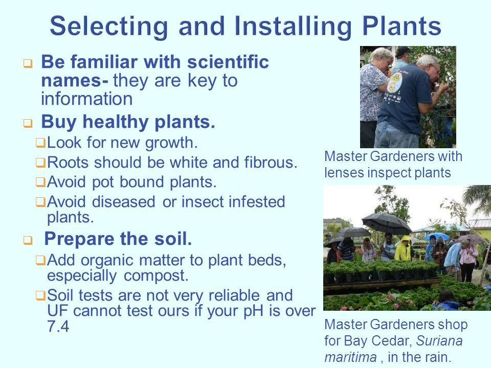 Selecting and Installing Plants