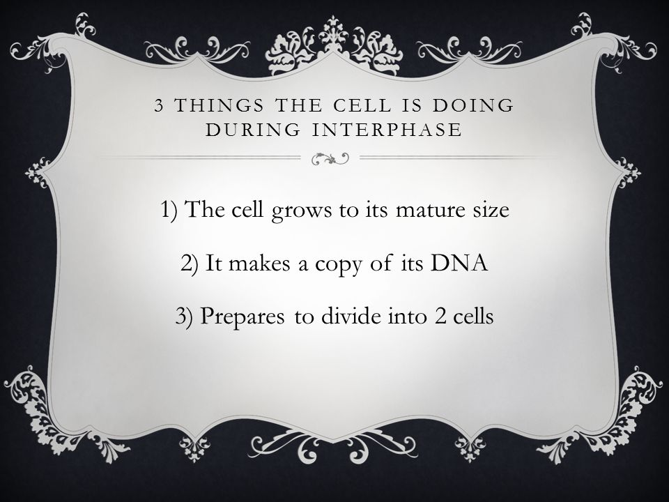 3 things the cell is doing during interphase