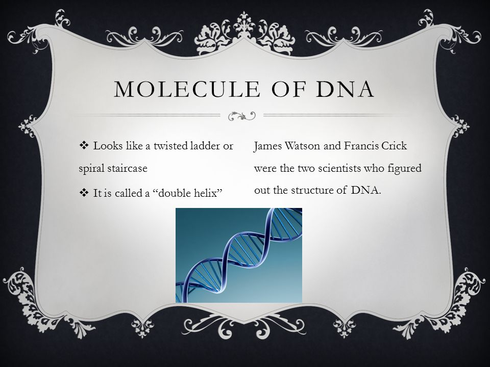Molecule of dna Looks like a twisted ladder or spiral staircase