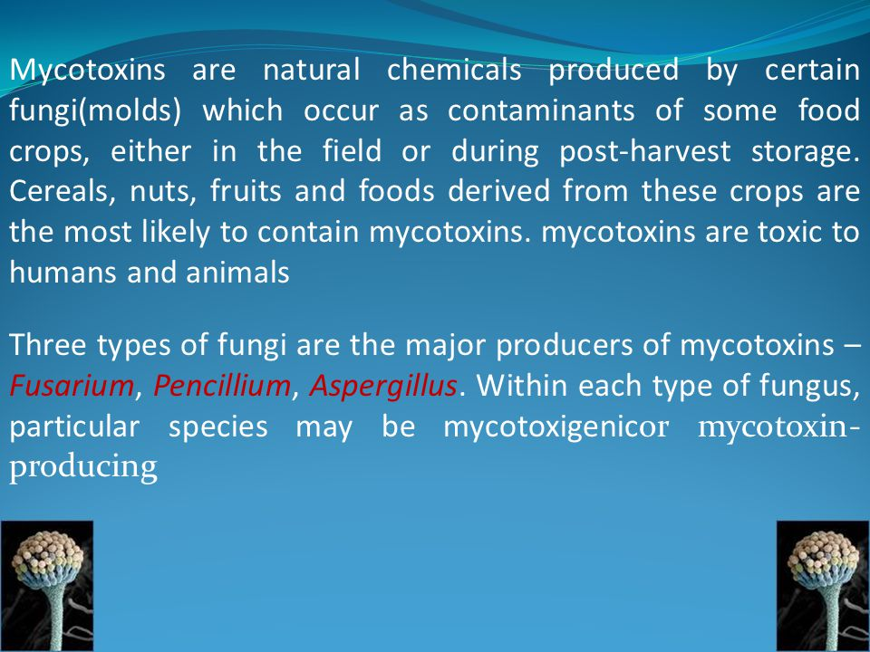 Mycotoxins are natural chemicals produced by certain fungi(molds) which occur as contaminants of some food crops, either in the field or during post-harvest storage. Cereals, nuts, fruits and foods derived from these crops are the most likely to contain mycotoxins. mycotoxins are toxic to humans and animals