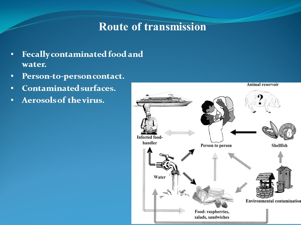 Route of transmission Fecally contaminated food and water.