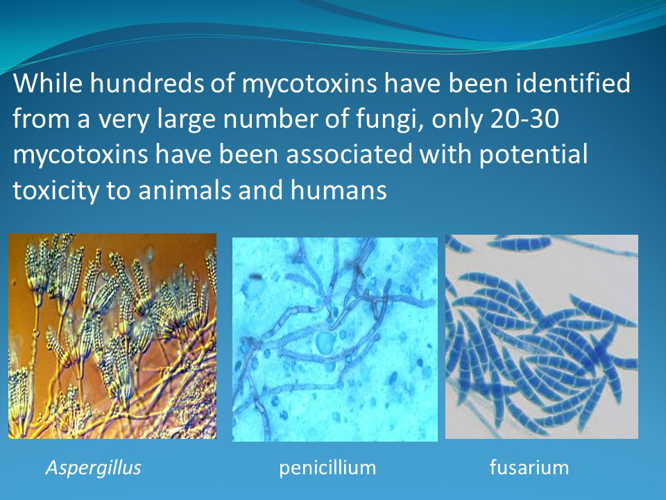 While hundreds of mycotoxins have been identified from a very large number of fungi, only 20-30 mycotoxins have been associated with potential toxicity to animals and humans