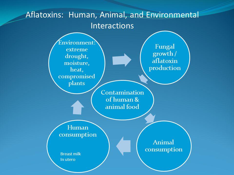 Aflatoxins: Human, Animal, and Environmental Interactions