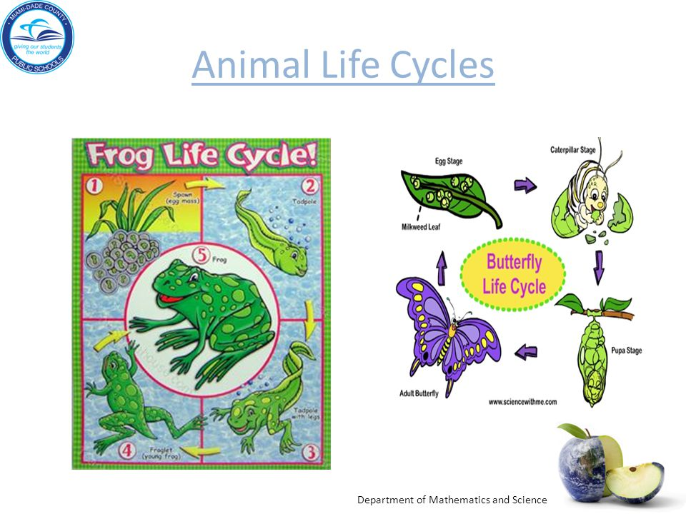 Animal Life Cycles Engage: Click on Discovery Ed.