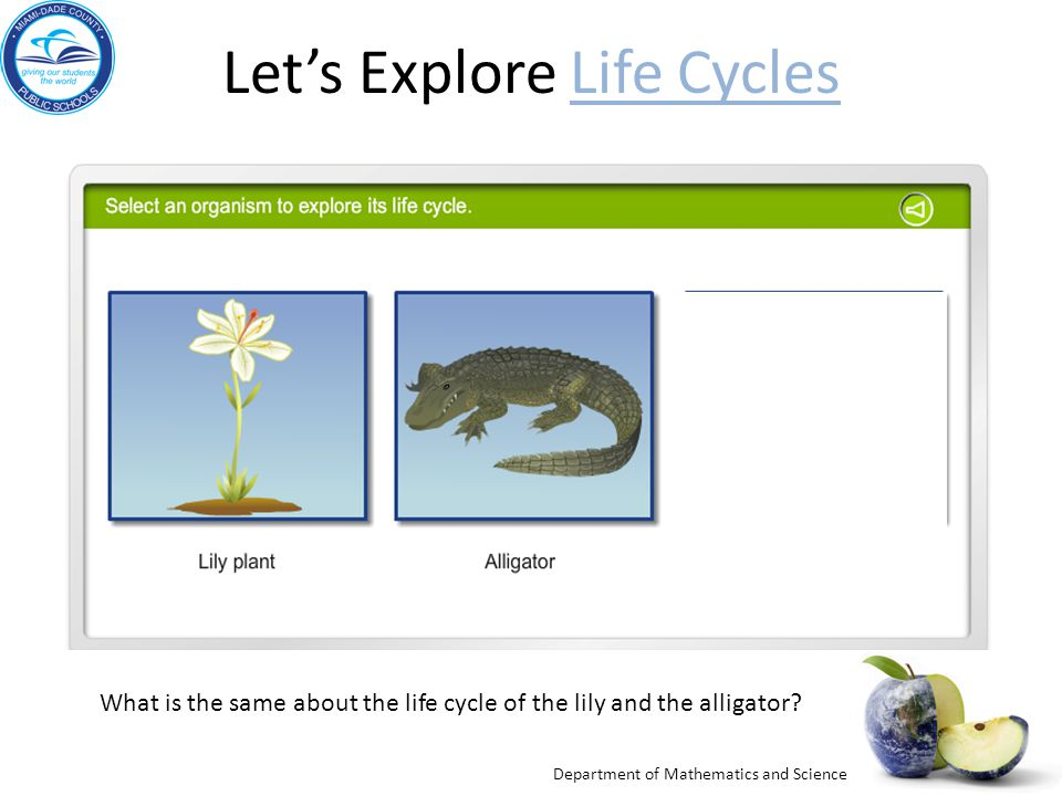 Let's Explore Life Cycles