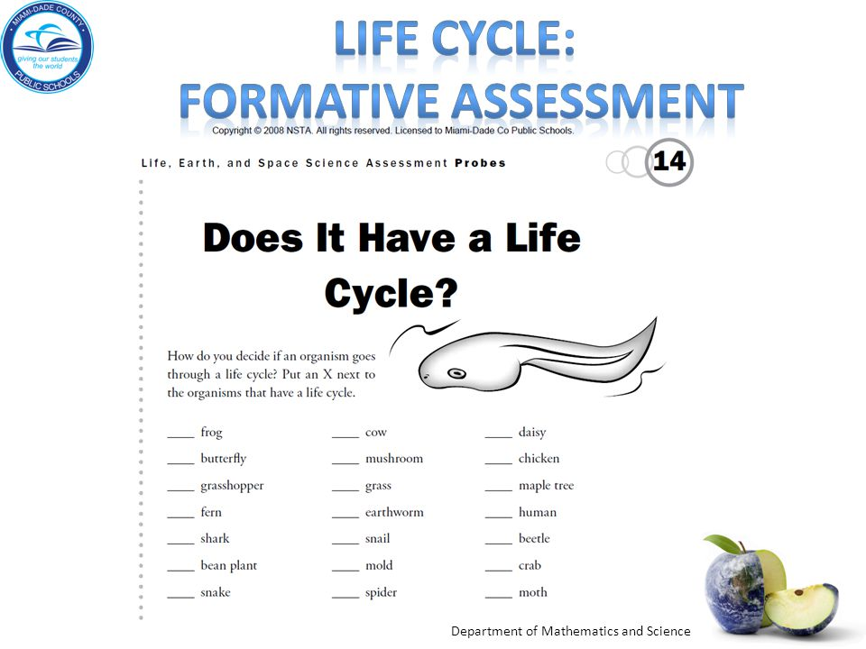 Life cycle: formative assessment