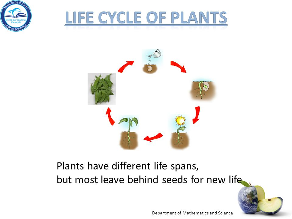 Life cycle of plants Plants have different life spans,