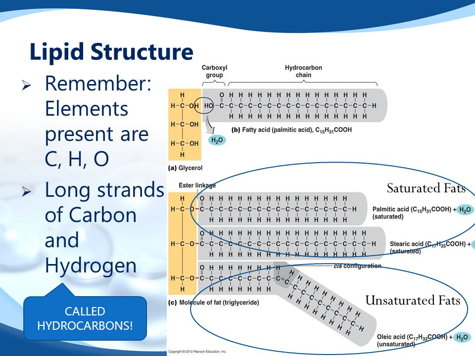 Lipid Structure Remember: Elements present are C, H, O