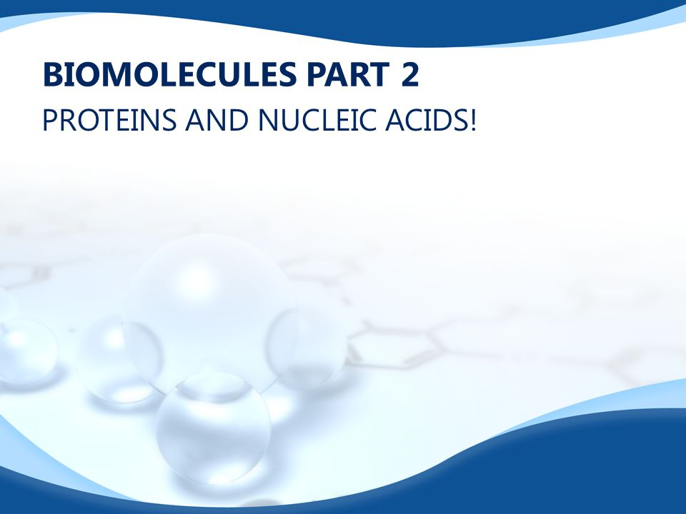 BIOMOLECULES PART 2 PROTEINS AND NUCLEIC ACIDS!