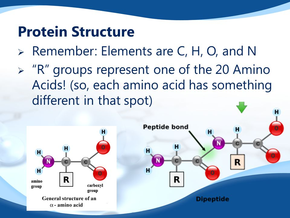 Protein Structure Remember: Elements are C, H, O, and N