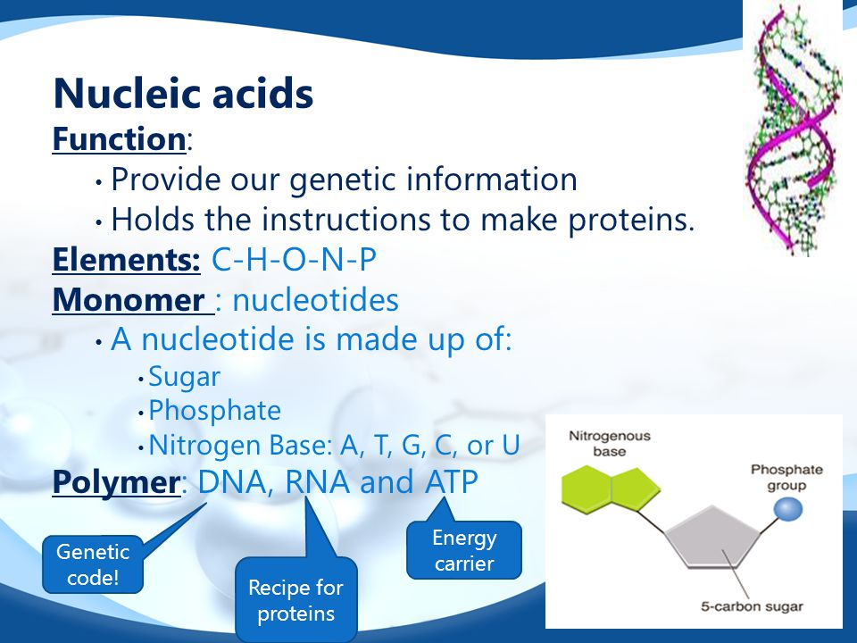 Nucleic acids Function: Provide our genetic information