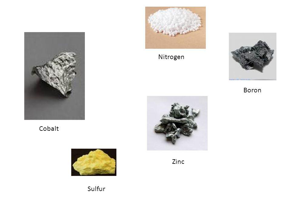 Nitrogen Boron Cobalt Zinc Sulfur