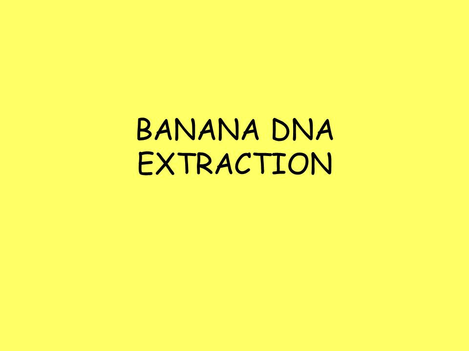 BANANA DNA EXTRACTION