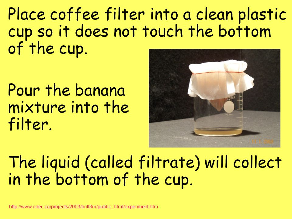 Place coffee filter into a clean plastic cup so it does not touch the bottom of the cup. Pour the banana mixture into the filter. The liquid (called filtrate) will collect in the bottom of the cup.