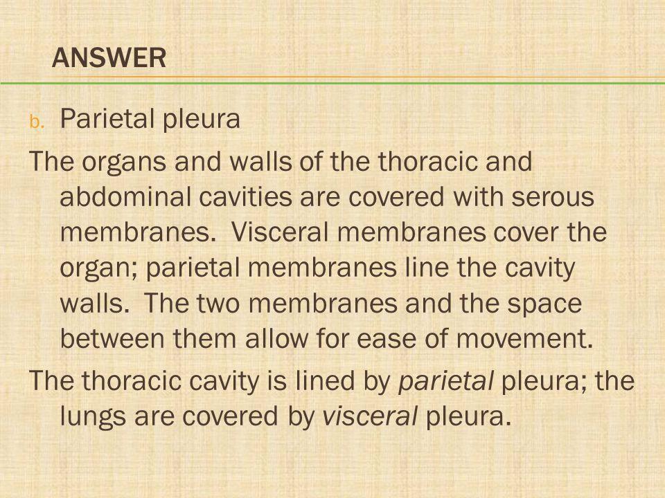 Answer Parietal pleura.