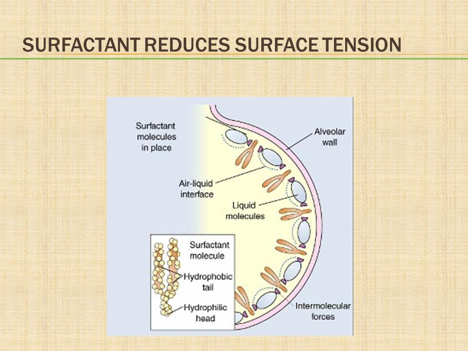 Surfactant Reduces Surface Tension