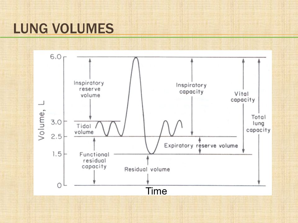Lung Volumes Time