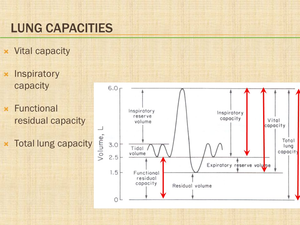 Lung Capacities Vital capacity Inspiratory capacity