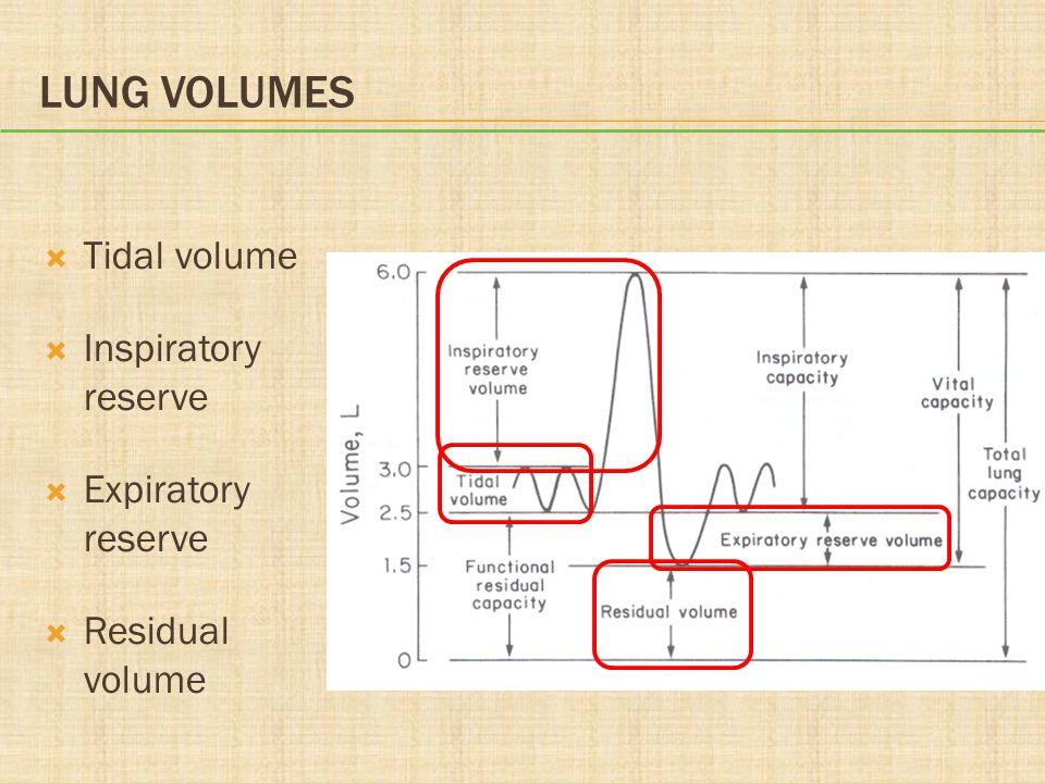 Lung Volumes Tidal volume Inspiratory reserve Expiratory reserve