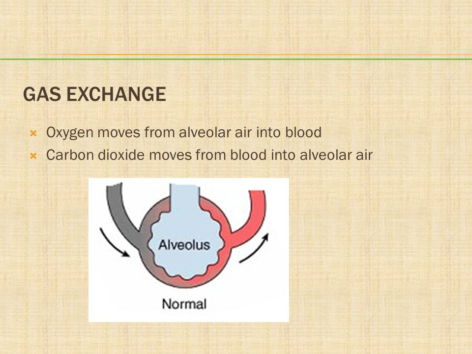 Gas Exchange Oxygen moves from alveolar air into blood